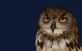 Картинка темный фон, сова, птица, owl