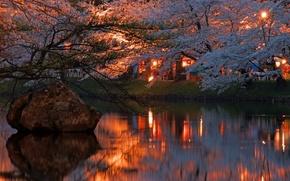 Картинка огни, река, вечер, сакура, Japan, цветение