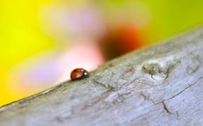 Картинка лето, макро, насекомые, природа, божья коровка