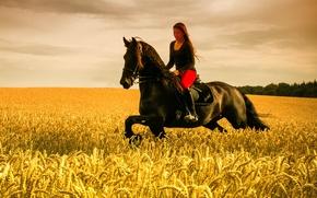 Картинка girl, horse, wheat field, riding, farmland