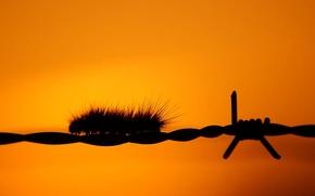 Картинка оранжевый, проволока, Гусеница