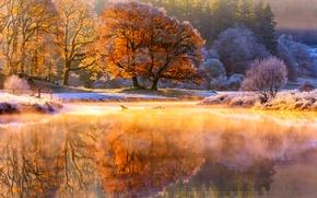 Картинка иней, осень, свет, деревья, природа, река, утро, пар, ноябрь