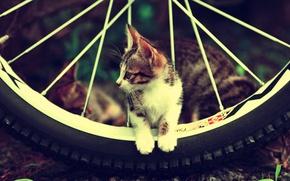 Картинка Cat, cute, fur