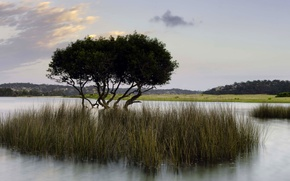 Картинка трава, вода, озеро, дерево