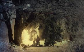 Картинка зима, иней, свет, деревья, парк, освещение