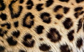 Картинка текстура, шерсть, пятна, леопард, мех