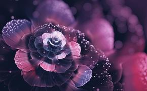 Картинка цветок, абстракция, красота, лепестки