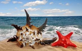 Картинка песок, море, пляж, звезда, ракушка, sea, sand, seashell, starfish