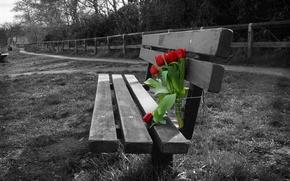 Картинка цветы, фон, тюльпаны, скамья