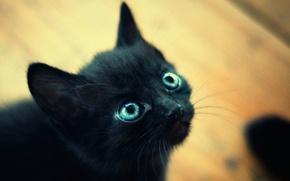 Картинка глаза, макро, котенок, черный, маленький, голубые, мордочка