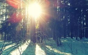 Картинка зима, снег, солнечные лучи, зимний лес, солнце.деревья