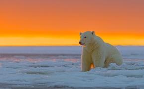 Картинка закат, Аляска, Белый медведь, ледяная пустыня, Национальный Арктический заповедник