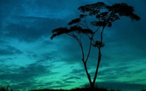 Обои небо, листья, облака, деревья, природа, фон, дерево, widescreen, обои, растительность, силуэт, ствол, wallpaper, деревце, широкоформатные, ...