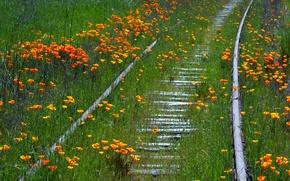 Обои лето, природа, цветы, железная дорога