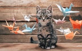 Картинка кот, усы, интерес, удивление, лапы, размытость, хвост, выбор, разноцветные, разные, оригами, cat, котяра, бумаги, журавль, …