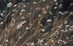 Картинка трава, растение, grass