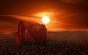 Обои поле, клевер, солнце, сено, рулоны
