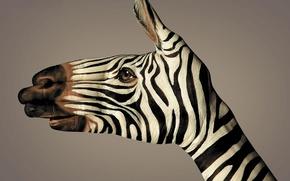 Картинка черно-белый, рука, полоски, зебра