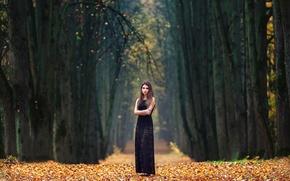 Картинка осень, девушка, аллея