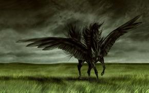 Обои поле, лошадь, крылья, Черный