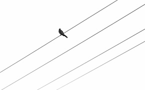 Картинка фон, птица, провода
