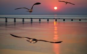 Обои море, чайки, мост, полет, закат