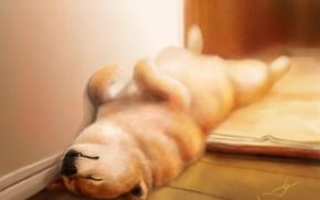 Картинка дом, сон, собака, арт, спит, щенок, на полу