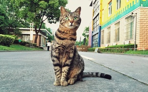 Картинка кот, взгляд, улица, кошак