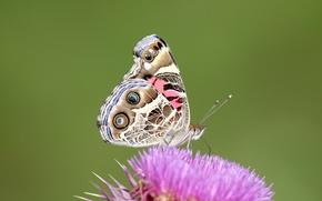 Обои цветок, макро, бабочка, узор, крылья