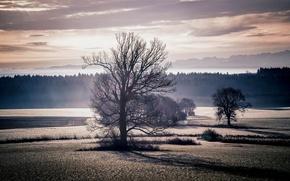 Обои поле, деревья, закат, пейзаж