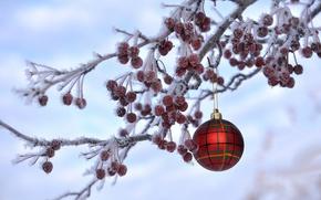 Обои рождество, новый год, ветка, ягоды