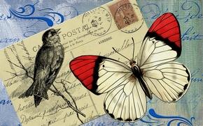 Картинка фон, птица, бабочка