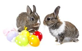 Картинка colorful, кролик, пасха, rabbit, пасхальный, eggs, easter, bunny, крашеные яйца