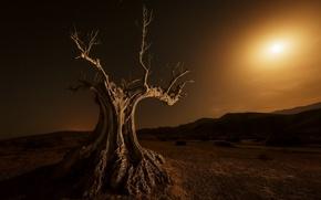 Картинка ночь, дерево, луна