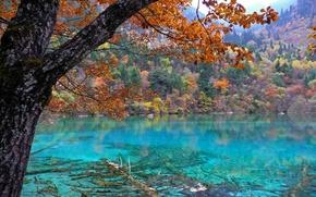 Обои осень, лес, деревья, природа, озеро