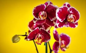 Картинка цветы, фон, орхидеи, пестрые