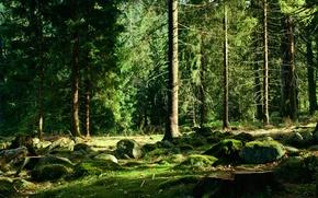 Картинка лес, деревья, камни, мох