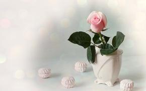 Картинка розовый, роза, бутон, ваза, зефир