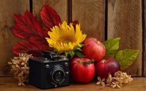 Картинка листья, яблоки, подсолнух, фотоаппарат