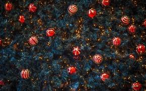 Картинка шары, ель, Новый Год, Рождество, красные, украшение, хвоя, Christmas, New Year, декор, Xmas, Merry, 2016