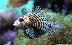 Картинка Fish, underwater, sea, ocean, exotic