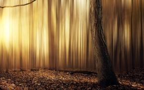 Картинка abstract, forest, yellow, tree, leafs, sun, warm