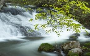 Картинка вода, камни, дерево, мох, поток
