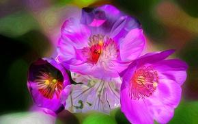 Картинка макро, линии, цветы, весна, лепестки, штрих