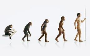 Обои человек, обезьяна, эволюция