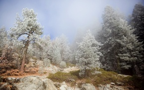 Обои деревья, пейзаж, горы, природа, туман