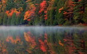 Картинка осень, лес, природа, туман, отражение, река