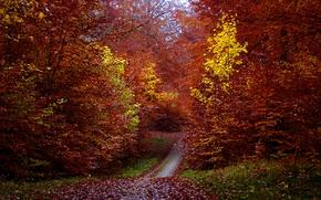 Картинка тропинка, листва, деревья, осень, лес, листья