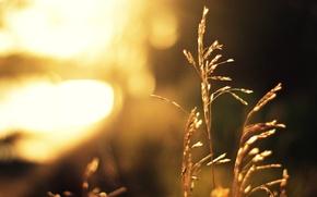Картинка трава, солнце, свет, растение, размытость, стебель, боке