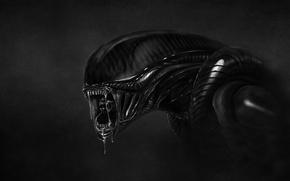 Картинка темный фон, монстр, чужие, чужой, инопланетянин, alien, слюни